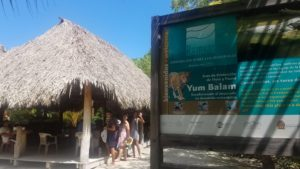 Yum Balam Preserve, Nature on Isla Holbox